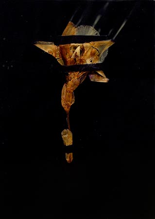 """Herbier de cire"" (series of 14), 1975  Flower and black Vergé paper in wax 24 x 17 cm, APP 037"