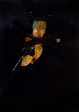 """Herbier de cire"" (series of 14), 1975  Flower and black Vergé paper in wax 24 x 17 cm, APP 039"