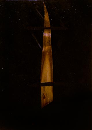 """Herbier de cire"" (series of 14), 1975  Flower and black Vergé paper in wax 24 x 17 cm, APP 038"