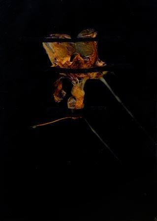 """Herbier de cire"" (series of 14), 1975  Flower and black Vergé paper in wax 24 x 17 cm, APP 029"