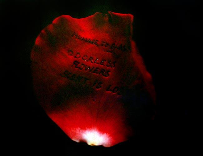 """""""Hommage à Blaschka"""" (Pièce Unique), 1978  Polaroid 50 x 65 cm, APP 002"""