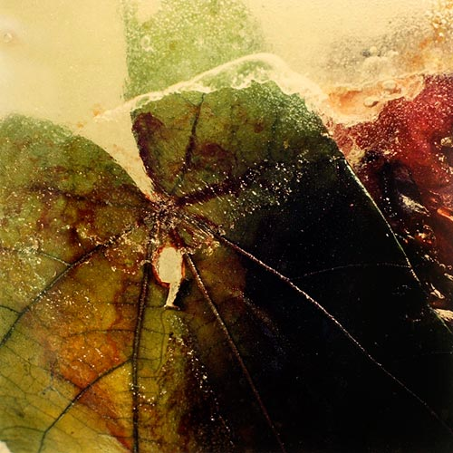 """""""Petales dans la glace"""" (1/5), 1999  Cibachrome 40 x 40 cm, APP 011"""